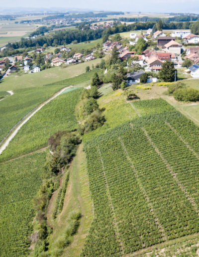 Vignoble Parisod Bellerive